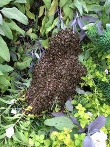 honeybee-1181558_640